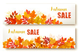 Two abstract autumn banners with colorful leaves Vector - 171484068