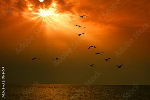 Poster Rood traf. flying birds against the background of the sunset over the sea