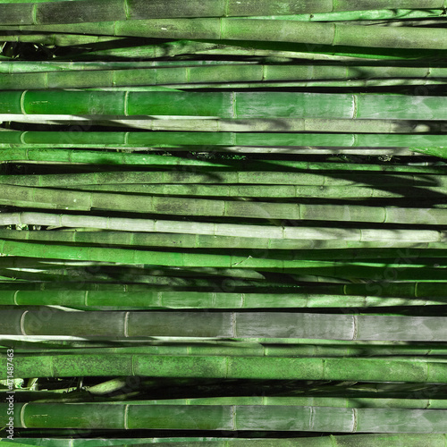 Fotobehang Bamboe Green bamboo fence texture, bamboo background, texture background, bamboo texture.High-resolution seamless texture