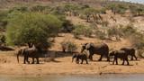 Elephant Herd leaving Waterhole