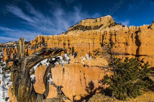 Foto op Canvas Nachtblauw Snag in Front of Hoodoos Along the Fairyland Loop Trail in Bryce Canyon