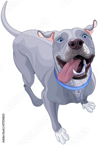 Tuinposter Sprookjeswereld Funny Pit Bull Dog