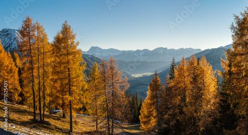 Aluminium Landschappen Autumn trees and mountains
