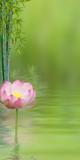 composition aquatique avec lotus rose et bambou