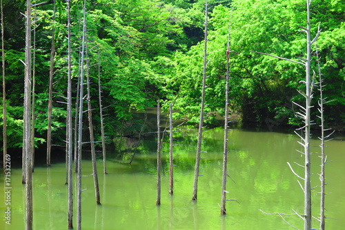 Fotobehang Tokio 花と池の公園の風景6