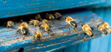 Life of bees. Worker bees. The bees bring honey. - 171538433