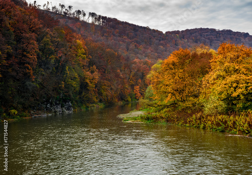 Aluminium Bergrivier forest river in autumn mountains