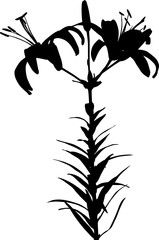 lily black silhouettes with two blooms and bud