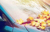 close up of car wiper with autumn leaves