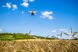 Dron w terenie, nad zbożem, nad wzgórzem - 171566031