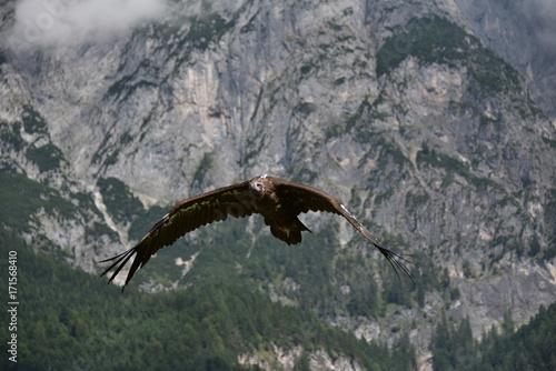 Fotobehang Natuur aquile in volo nei cieli di montagna