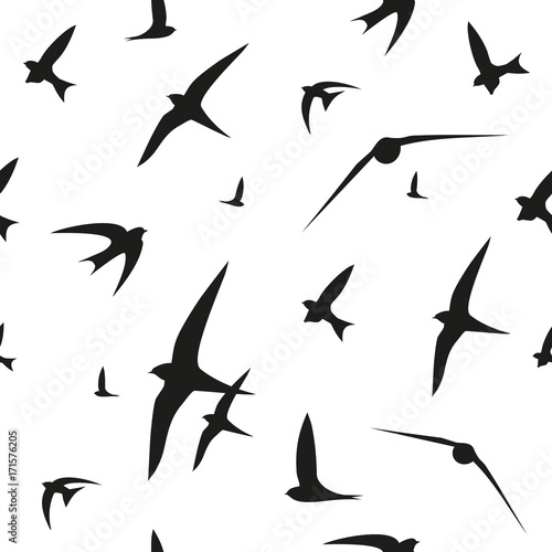 Swallow, swift, birds. Graphic vector pattern. Decorative seamless background - 171576205