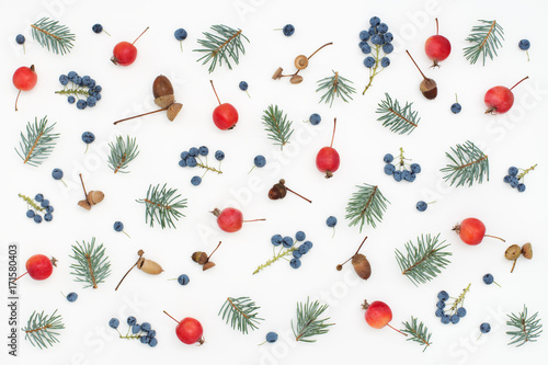 seasonal pattern of berries, paradise apples, acorns and spruce - 171580403