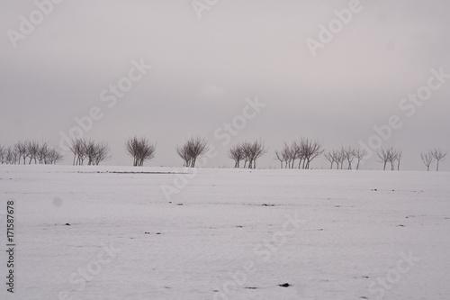 Fotobehang Donkergrijs Winter rural landscape