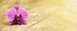 Zen balance concept - website banner of a purple orchid flower