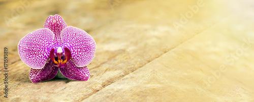 Foto op Canvas Zen Zen balance concept - website banner of a purple orchid flower