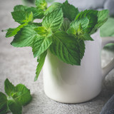 Fresh mint in white mug closeup on a gray background - 171600023