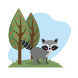 cute raccoon animal to natural wildlife vector illustration