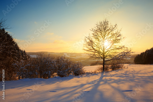 Spoed canvasdoek 2cm dik Meloen Winter sunset landscape with tree.