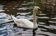 White Swan in Bruges, Belgium - 171613692