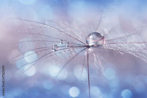 Water drop on a dandelion seed , multicolored background bokeh. Selective focus. - 171628608