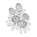 vector contour illustration of exotic flower bouquet  - 171628825