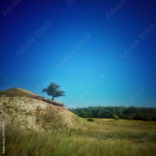 Одинокий дуб на холме
