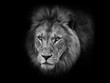 Lion head black and white