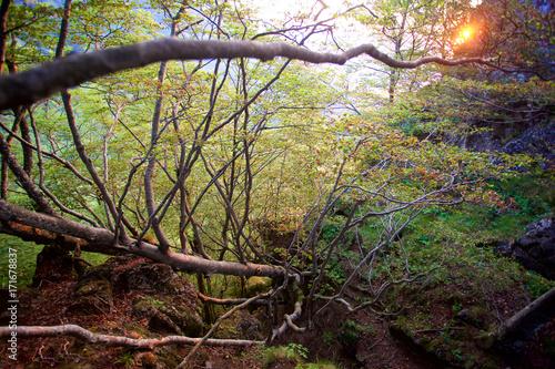 Fotobehang Weg in bos Sant Pere de Torelló