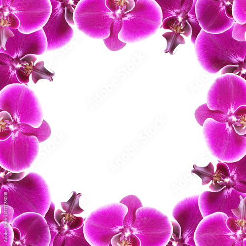 Beautiful floral background of purple orchids  - 171728008