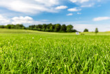 Green golf course with blue sky.