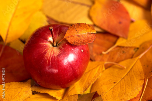 Apple closeup on fallen leaves background, autumn season - 171738231