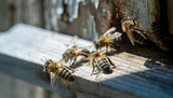 The sun shine at the entrance of an old beehive, close up. Bees ready to start pollinating plants. - 171752287