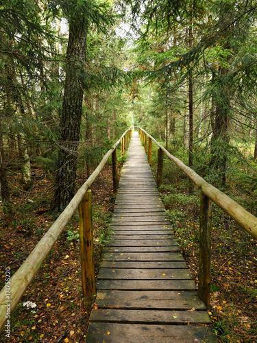 Fotobehang Weg in bos Torfowisko wysokie w barwach jesieni wraz z kładkami dla zwiedzających