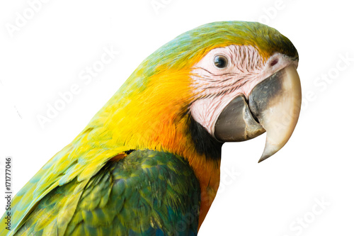 Fotobehang Papegaai A macaw isolate.