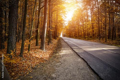 Foto op Canvas Grijze traf. autumn road