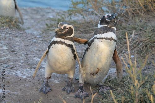 Fotobehang Pinguin Pinguim se abraçando
