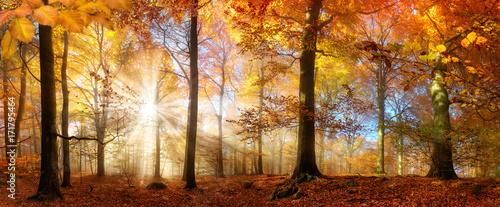 Papiers peints Orange eclat Die Sonne scheint durch Nebel in einem goldenen Wald im Herbst