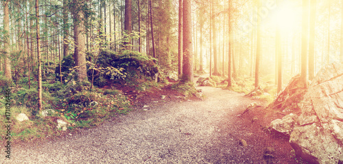 Papiers peints Beige Vintage Landscape with Autumn Forest
