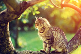 Cute cat sits on a branch of a tree in a garden at sunset light