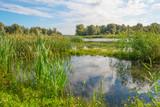 Lake shoreline in sunlight in summer - 171840267