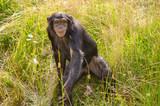 Lachender Affe im Zoo - 171854826