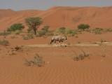 Namib2