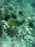 Mnemba Atoll, Sansibar 5