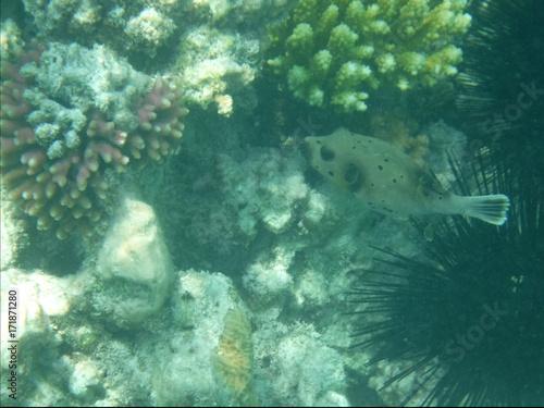 Keuken foto achterwand Zanzibar Mnemba Atoll, Sansibar 4