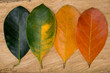 Autumn composition, colorful leaves in a row. over wooden background.