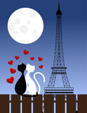 Cats and Eiffel tower