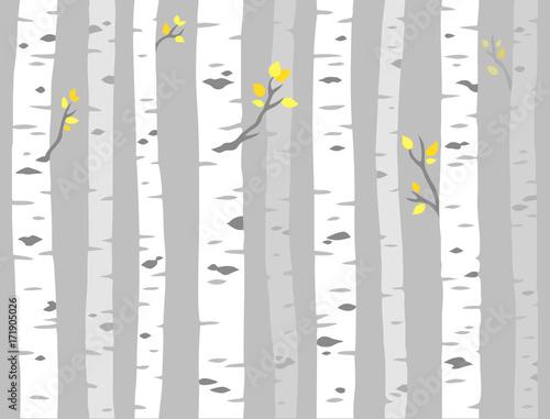 Fototapeta Aspen tree pattern