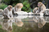 igokudani Monkey Park , monkeys bathing in a natural hot spring at Nagano , Japan - 171906214