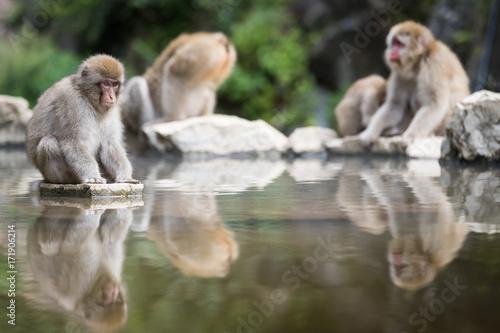 Fotobehang Aap igokudani Monkey Park , monkeys bathing in a natural hot spring at Nagano , Japan
